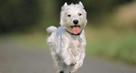 dna tests til hunde agria dyreforsikring