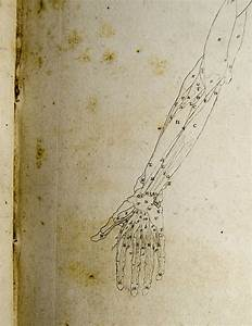 Anatomical Diagram Of The Hand And Arm