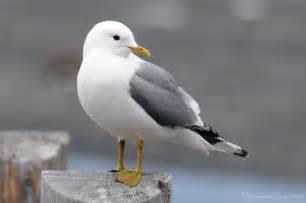 Photography Seagulls Birds