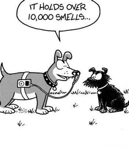 dog humor  black  white images  pinterest