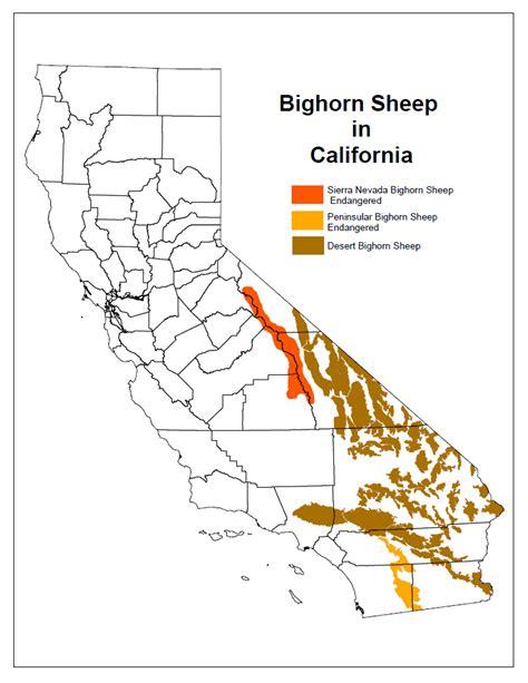 peninsular desert bighorn sheep distribution