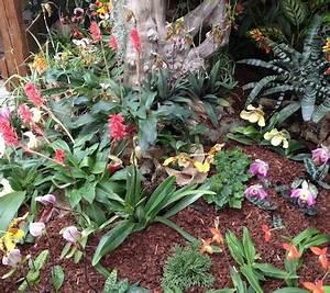 Luftwurzeln Bei Orchideen : orchideen ausstellung bei orchideen handlbauer ~ Frokenaadalensverden.com Haus und Dekorationen