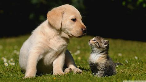 cute dog cat than why better animals