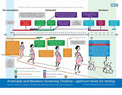 Screening Antenatal Nhs Newborn Pregnancy Tests Postpartum