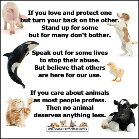 animal rights poetry tumblr