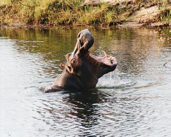 LIVING TRAVEL - SOUTHERN AFRICA - ZIMBABWE/ZAMBIA ...