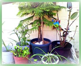 non toxic houseplants for cats non toxic house plants for children cats and dogs