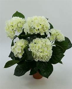 Hortensie Umpflanzen Im Topf : hortensienbusch deluxe 42cm wei creme im topf lm k nstliche blumen hortensie ebay ~ Orissabook.com Haus und Dekorationen