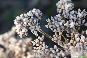 Gräser Zurückschneiden Frühjahr : so machst du deinen garten winterfest pflanzen mobiliar ~ Lizthompson.info Haus und Dekorationen