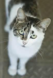 unique cats 1000 images about cat markings fur patterns on