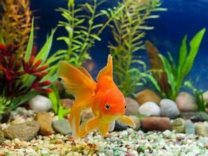 Süßwasserfische Fürs Aquarium : die beliebtesten aquarium fische ~ Lizthompson.info Haus und Dekorationen