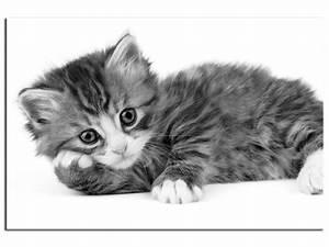 Tableau Photo Noir Et Blanc : cadre chat noir et blanc d coration murale moderne hexoa ~ Melissatoandfro.com Idées de Décoration