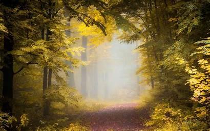 Forest Sunlight Nature Morning Mist Landscape Path