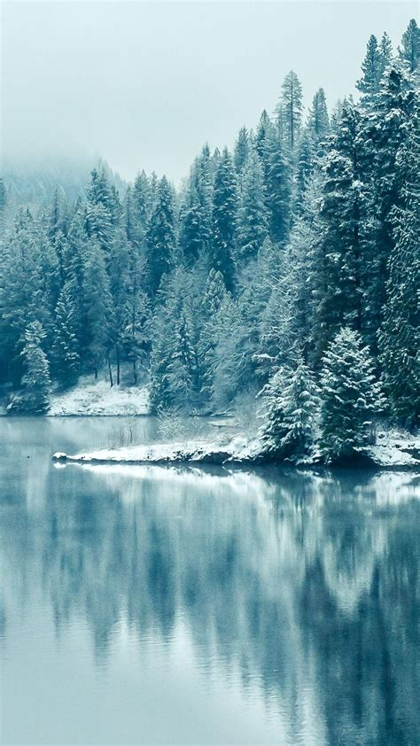 pine forest lake snow iphone   hd wallpaper ipod