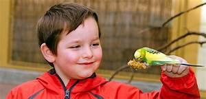 Kopfkissen Für Kinder Ab Welchem Alter : kinder und haustiere welches tier ab welchem alter ~ Bigdaddyawards.com Haus und Dekorationen
