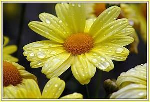 Die Farbe Gelb : das leben ist bunt die farbe gelb ~ Watch28wear.com Haus und Dekorationen