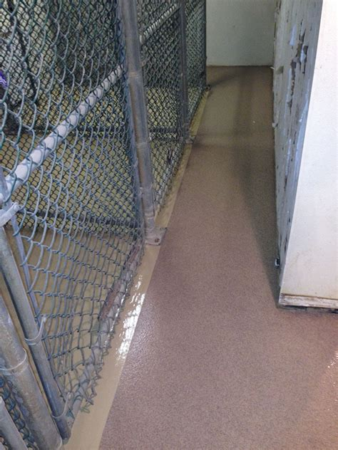 epoxy flooring veterinary animal care epoxy flooring philadelphia epoxy