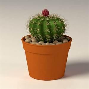 Pot A Cactus : 3d model cactus pot ~ Farleysfitness.com Idées de Décoration
