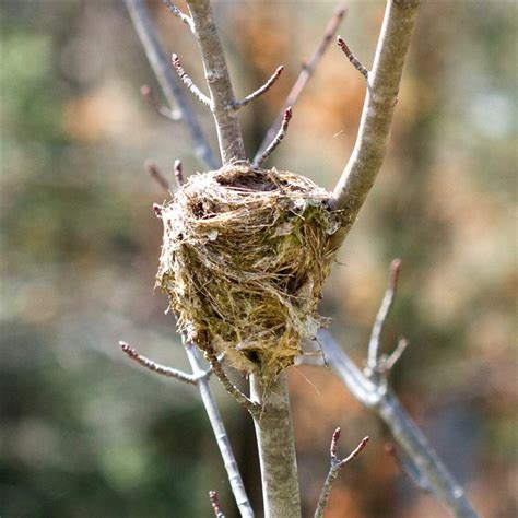 let s talk about birds birds nests pittsburgh post gazette