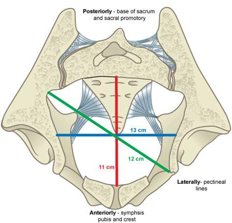 pelvic dimensions pelvic inlet stratog