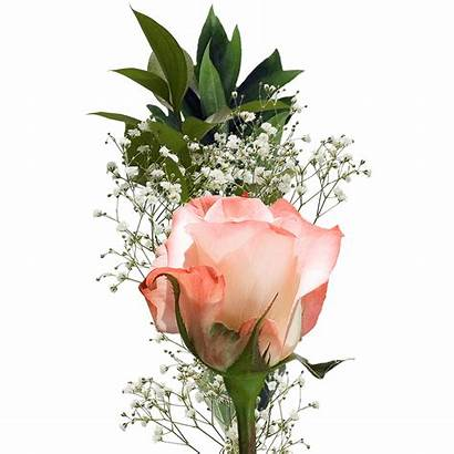 Single Roses Valentine Flower Bouquet Rose Valentines