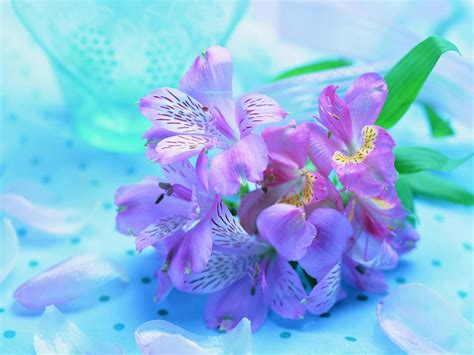 Beautiful Hd Fresh Image by Beautiful Fresh Flowers Pictures Photos And Images For