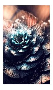 3D, Abstract, Fractal, Fractal Flowers, Digital Art ...