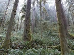 File:Oregon forest.jpg Oregon