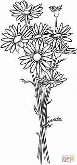 Coloring Daisies Daisy Pages Super Flower Flowers Printable Daisys Adult Supercoloring sketch template