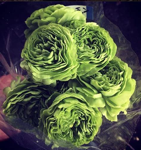 images  bloemen groen flowers green  pinterest