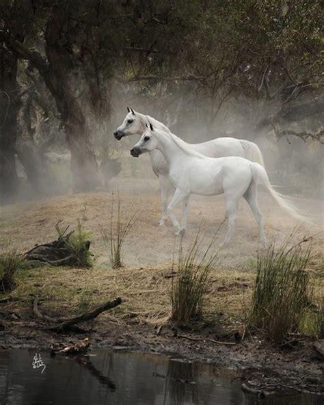 ☀stuart Vesty Photography  Horse, Horses, Horse Crazy