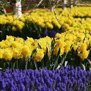 Blumen Im Garten : blumen f r den garten wundersch ne tulpen f r den fr hling ~ Bigdaddyawards.com Haus und Dekorationen