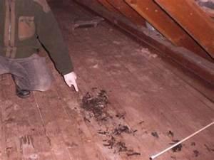 Marder Auf Dachboden : den marder auf dem dachboden wieder loswerden ~ Frokenaadalensverden.com Haus und Dekorationen