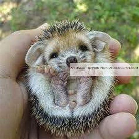 animales tiernos inspiran imagenes de animales bebes pequenos