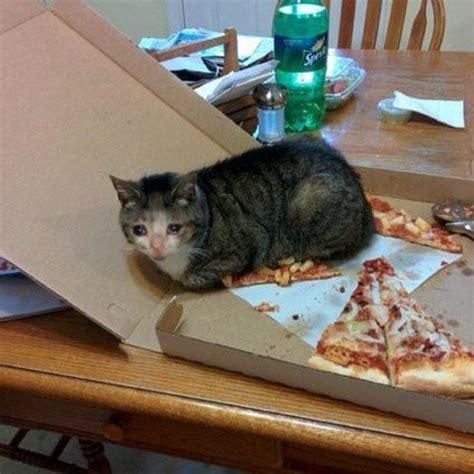 Pin En Sad Cat