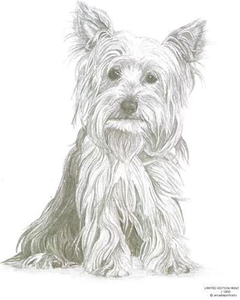 yorkshire terrier  yorkie dog limited edition pencil