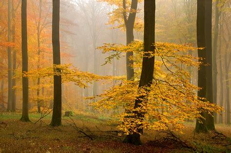 im herbstwald forum fuer naturfotografen