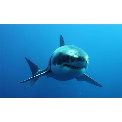 What's The Deal With Sharks?