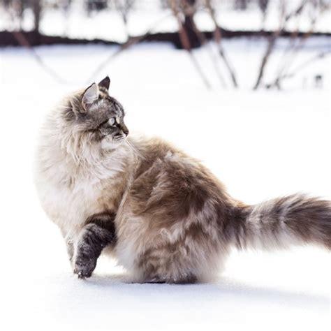 hochwertiges katzenfutter katzenpflege tipps perfect fit