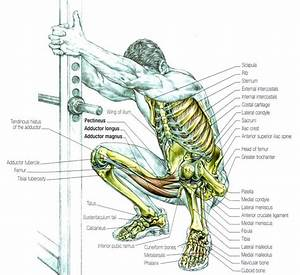 155 Best Images About Male Anatomy On Pinterest