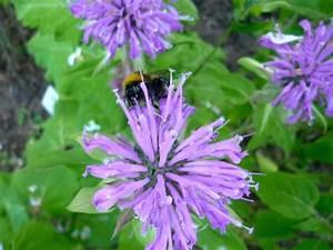 Was Vertreibt Bienen : kr utergarten bienen leben in ~ Eleganceandgraceweddings.com Haus und Dekorationen