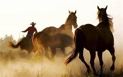 Western Horse Cowboys Animals Desktop Backgrounds Wallpapers