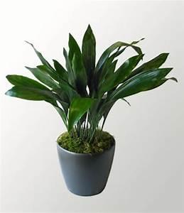 Pflanzen Die Nicht Viel Licht Brauchen : zimmerpflanzen die wenig licht brauchen ~ Markanthonyermac.com Haus und Dekorationen