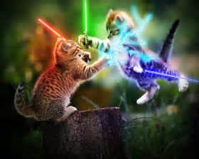 wars cats cats lightsabers wallpaper 1280x1024 wallpoper