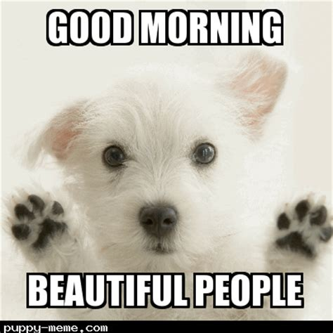 Good Morning Son Meme - the gallery for gt sorry puppy meme
