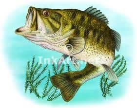 Largemouth Bass Fish Drawing
