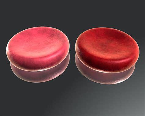 deoxygenated blood color hemoglobin interesting more facts yo yo guys