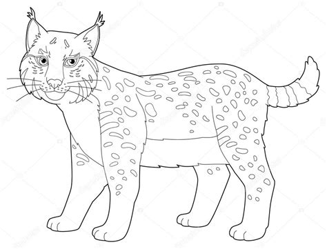 Kleurplaat Maken Illustrator by Dier Lynx Ge 239 Soleerd Kleurplaat Pagina