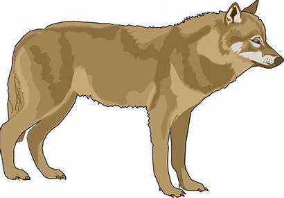 Wolf Clip Clipart Wolves Cliparts Animal Animals