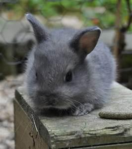 Veilleuse Bébé Lapin : b b s lapins d couvrez ces irr sistibles petites boules de poils en images ~ Teatrodelosmanantiales.com Idées de Décoration
